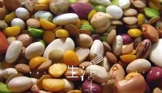 黄豆粉痛风病人能吃吗