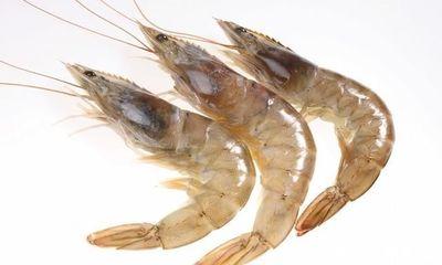 博兴成中国白对虾生态养殖第一县