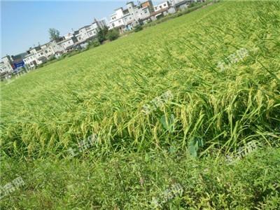 武汉市农业农村局赴汉南区调研农村集体产权制度改革整区推进试点工作