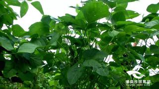 玉米大豆套种全程机械化一亩田种出两亩收益