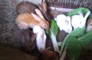 湖南小伙返乡养兔发家致富的故事