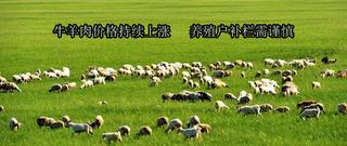 牛羊肉价格持续上涨养殖户补栏需谨慎