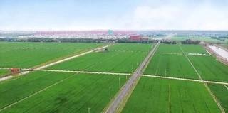 无人农场育水稻楼上养猪积肥料