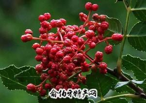 甘肃大红袍花椒