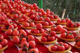 第四届内蒙古喀喇沁番茄节开幕