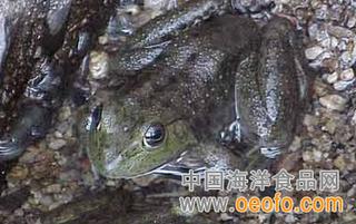 福建宁德古田县整治牛蛙养殖污染