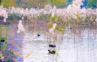 北京顺义湿地保护鸟类新增多种
