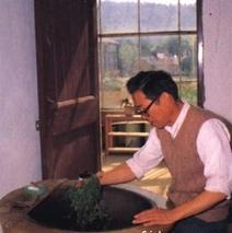 工夫红茶采制工艺