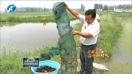 河南:深化农业供给侧结构性改革 扛稳粮食安全重任