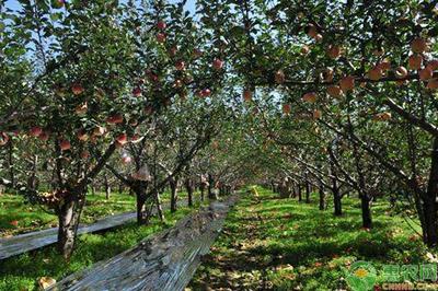 果园八大高产栽培管理要点