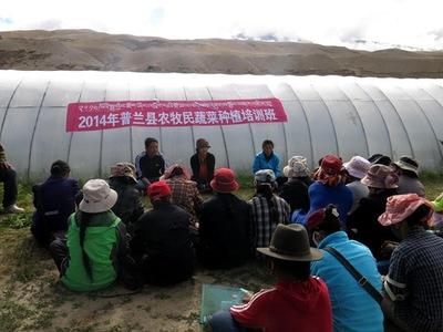 西藏区农科院蔬菜研究所培训农牧民蔬菜种植技术