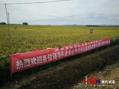 """黑龙江富锦把水稻""""种出花""""来"""