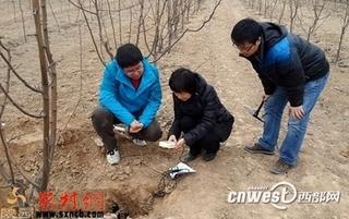 陕西紧急发布苹果花期冻害防御指南