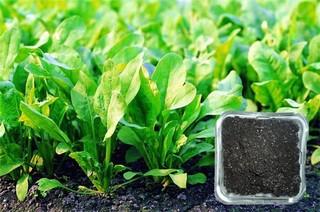 生物有机肥 施用有方法