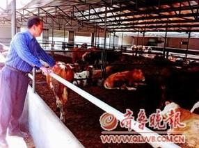 牛肉半年涨价6次 养殖户却不爱养牛了?