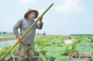 """长沙市盘龙岭村:""""荷花虾""""俏了 贫困户笑了"""