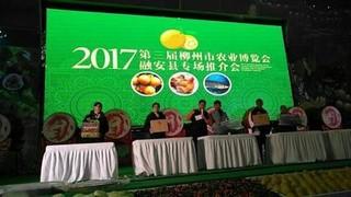 融安金桔在柳州农博会上受欢迎
