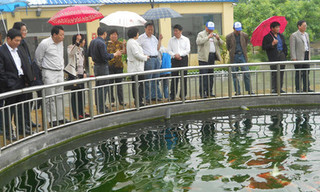 河南濮阳市蒋庄打造黄河鲤鱼养殖基地