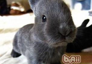 七种以草代药可防治兔病
